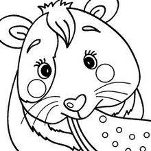 dessin de hamster russe