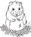 dessin hamster a imprimer gratuit