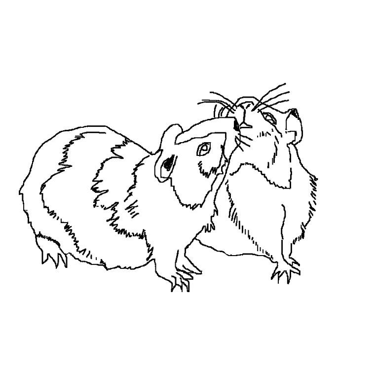 master hamster dessin animé