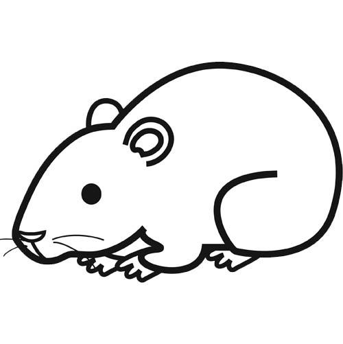 coloriage de hamster nain