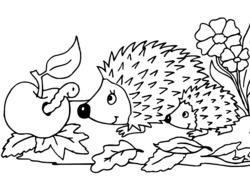 coloriage à dessiner de herisson