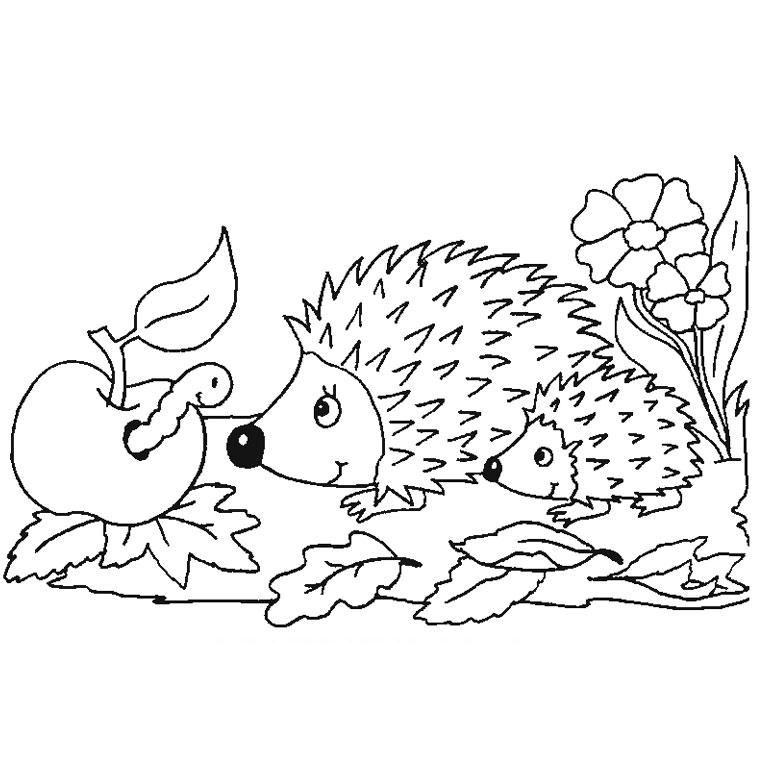 coloriage à dessiner hérisson à imprimer