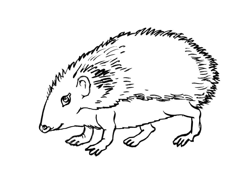 dessin à colorier mandala hérisson