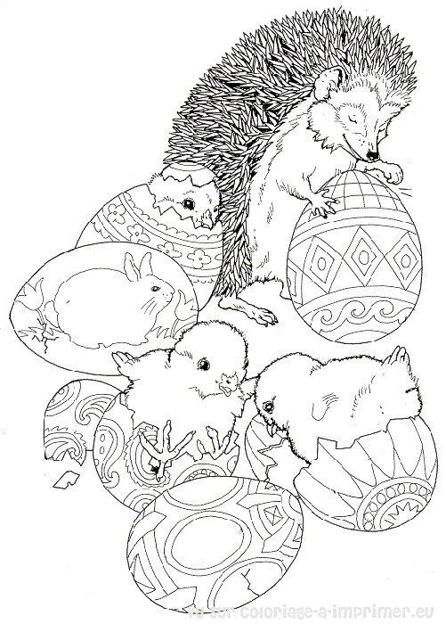 dessin à colorier herisson gratuit