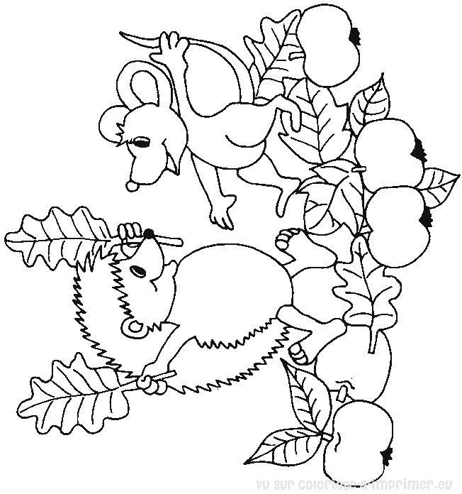 dessin le hérisson