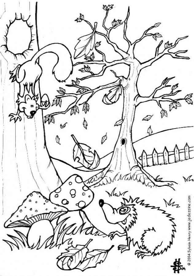 coloriage à dessiner herissons