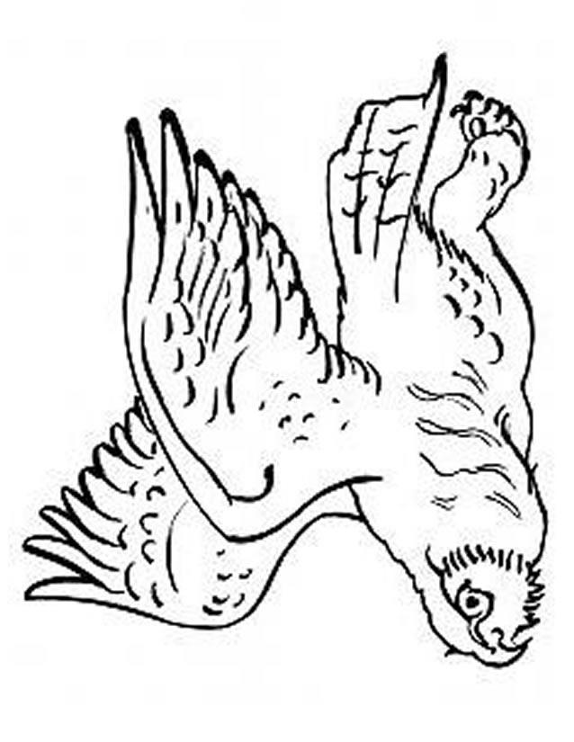 coloriage à dessiner hibou a imprimer gratuit