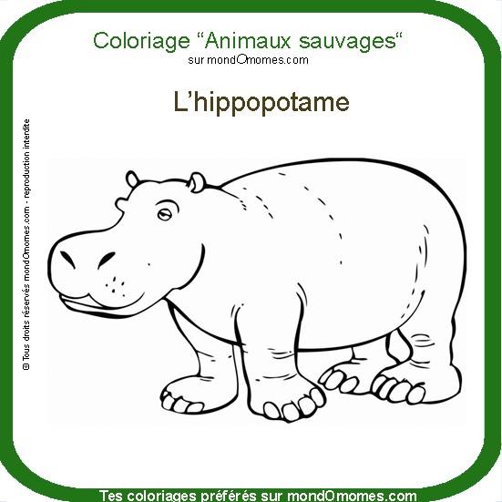 dessin dessin � colorier hippopotame