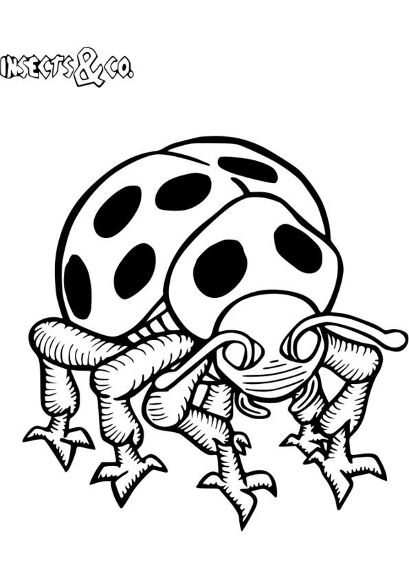 dessin d insecte