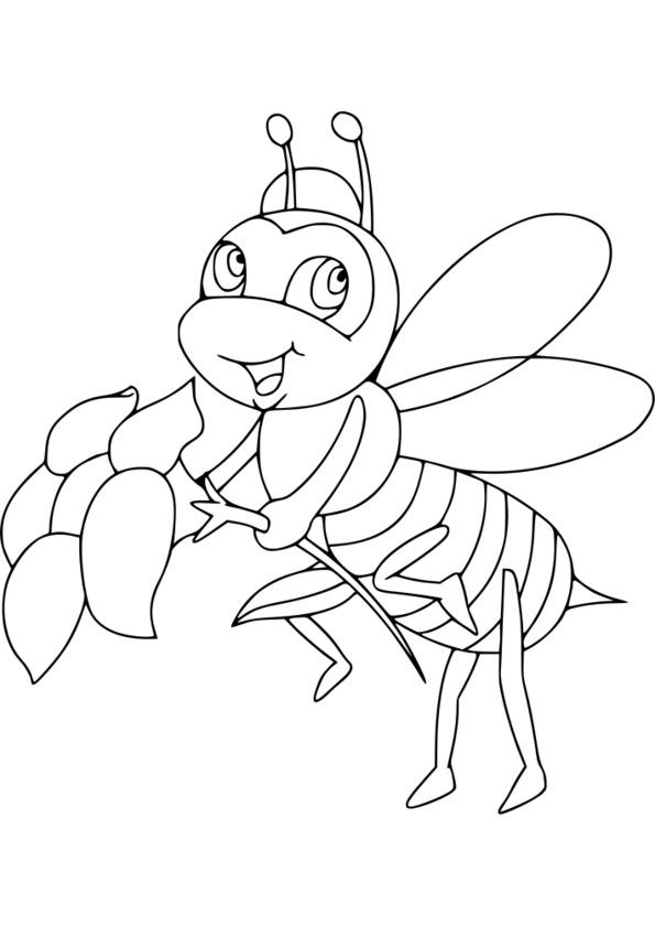 dessin plusieurs insectes