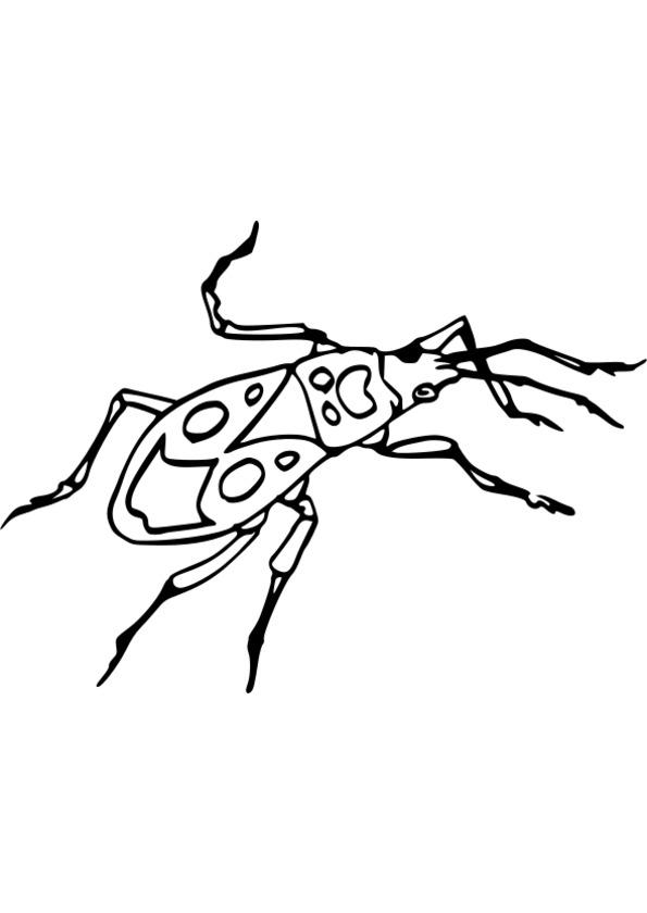dessin à colorier insectes gratuit