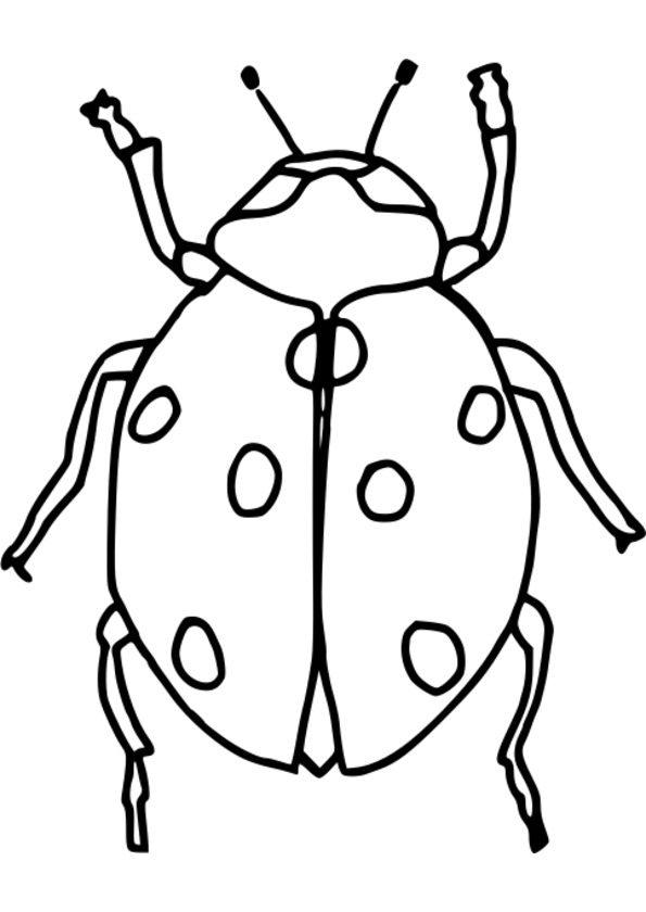 dessin à colorier insectes du jardin
