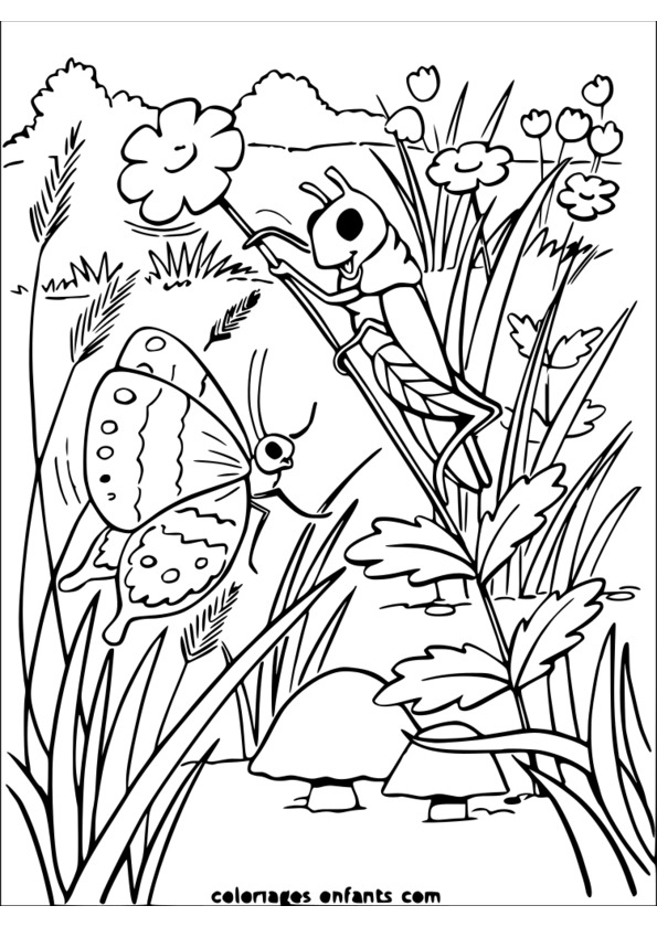 dessiner des insectes ce1