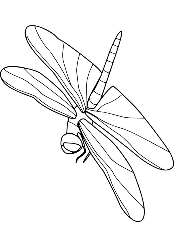 dessin à colorier magique insectes