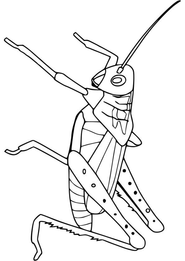 coloriage à dessiner codé insecte