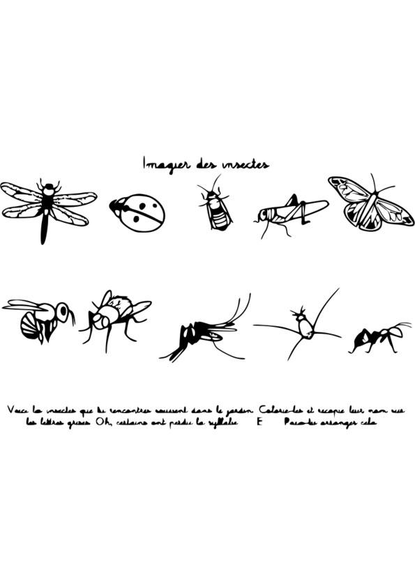 coloriage à dessiner insecte a imprimer