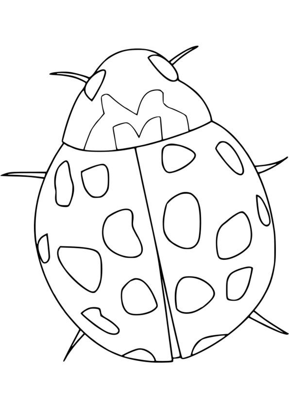 dessiner les insectes