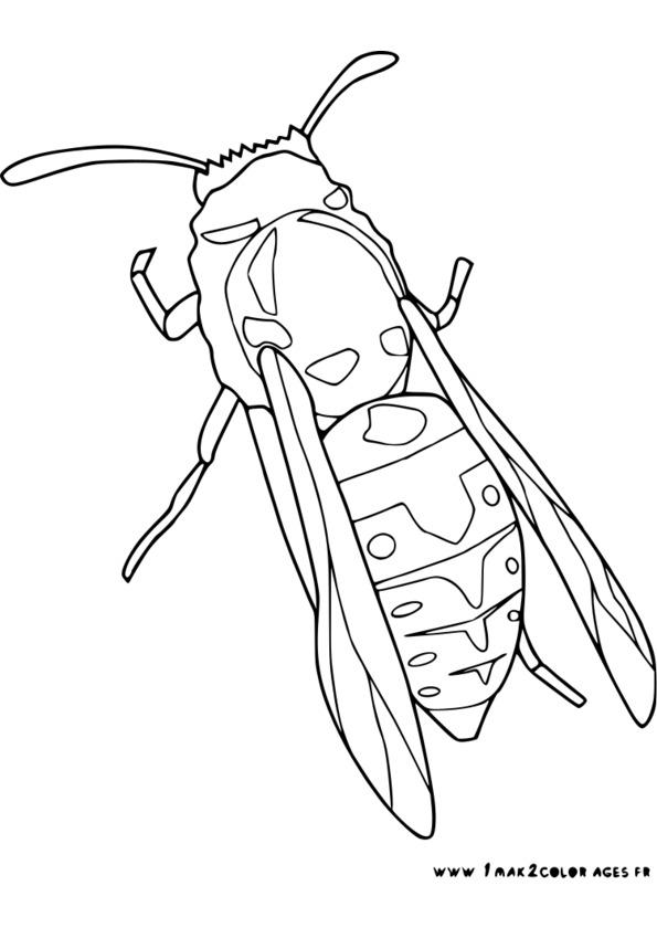 dessins à colorier insectes