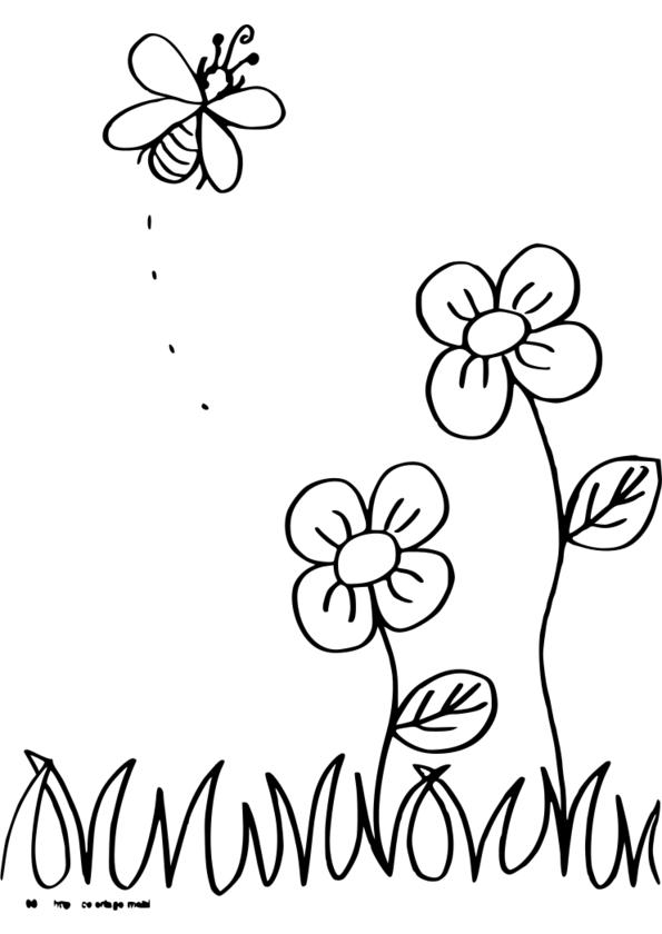 coloriage à dessiners insectes printemps