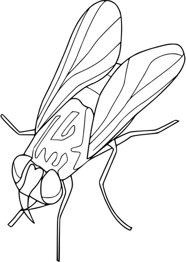dessin à colorier insectes hugo l'escargot