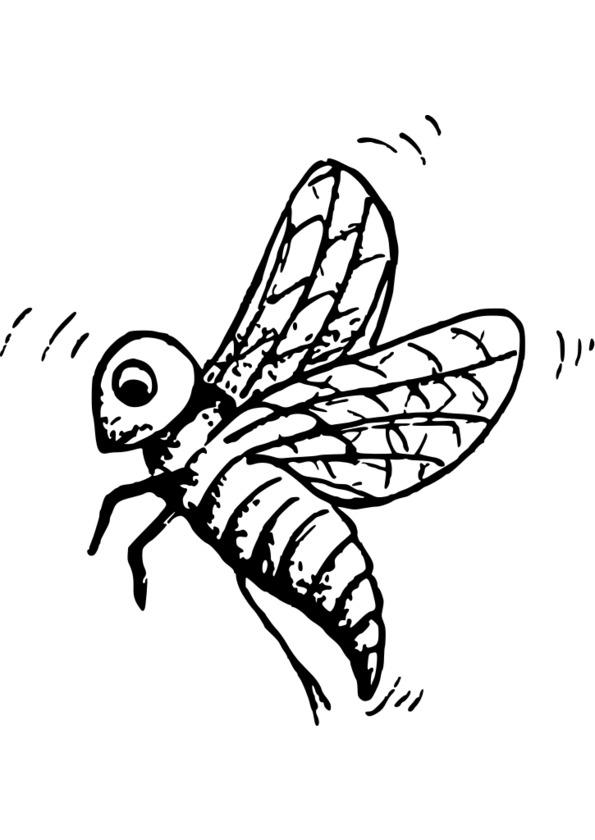 coloriage à dessiner insecte a imprimer gratuit