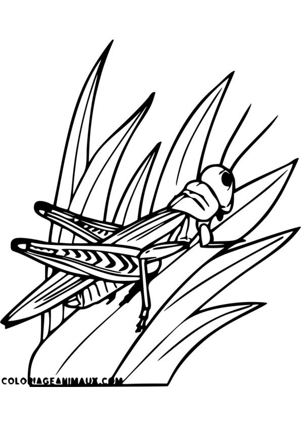 dessin mandala insecte