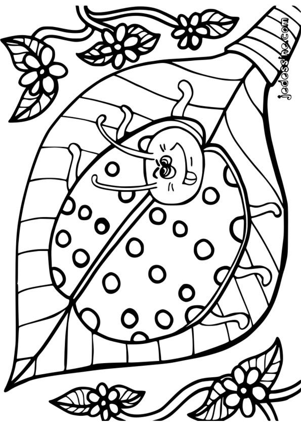 dessin à colorier insecte a imprimer gratuit