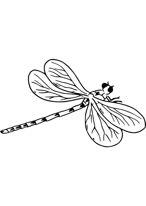 dessin grillon insecte