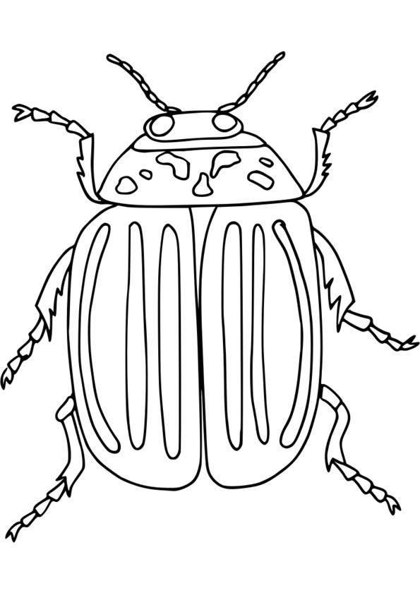Coloriage insecte gendarme - Coloriage insecte ...
