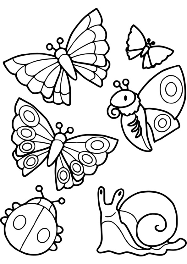 dessins insectes maternelle