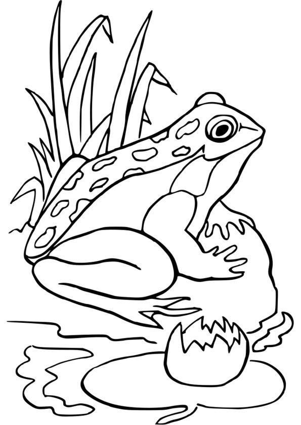 dessin à coloriers insectes printemps
