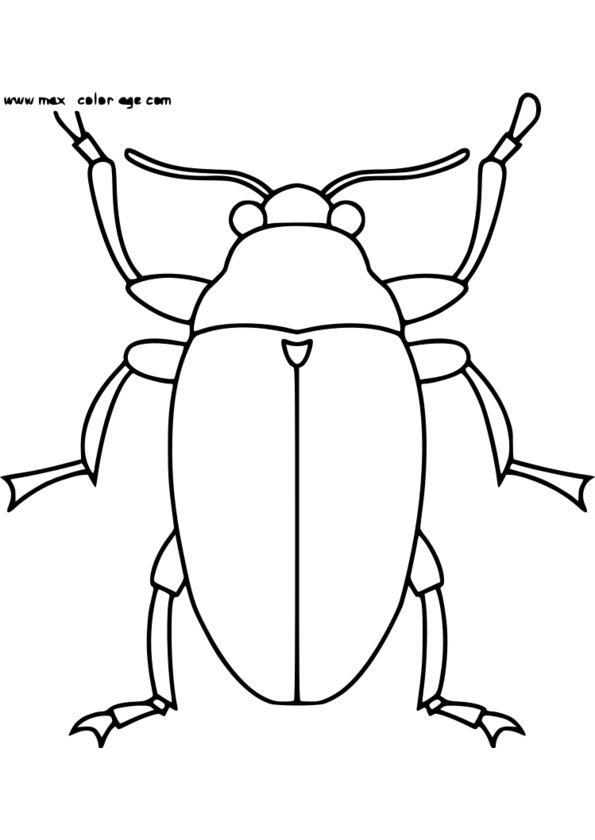 dessin à colorier insectes maternelle