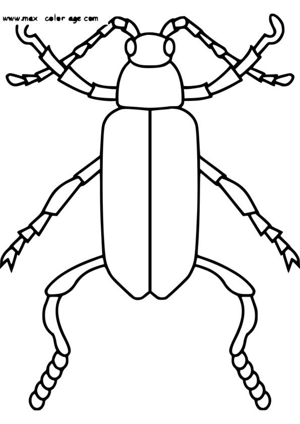 dessin naturaliste insecte