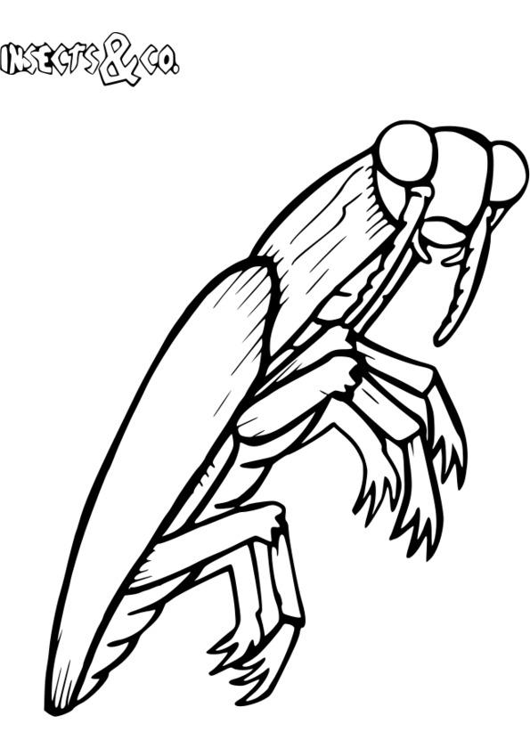 dessin gratuit insectes imprimer