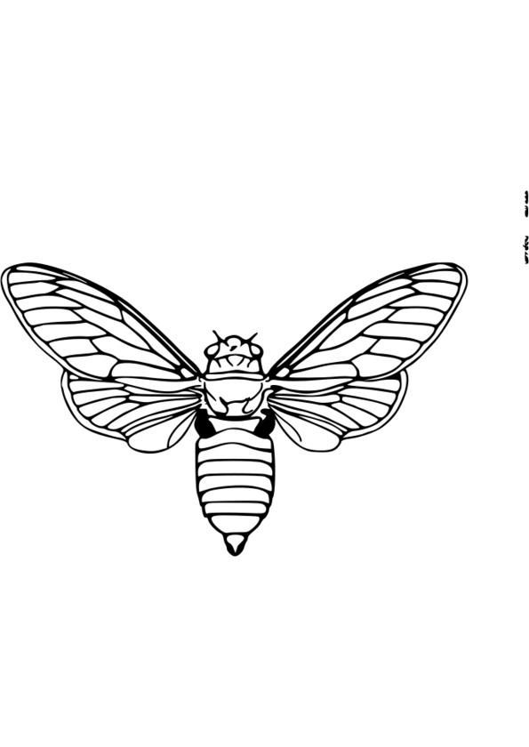 dessin magique insecte