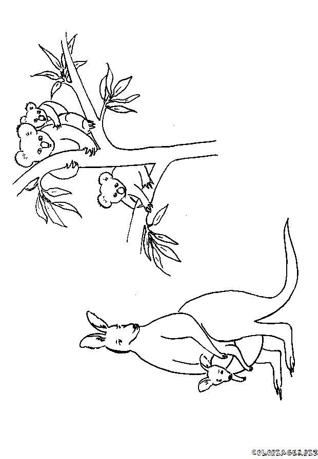 coloriage à dessiner de koala hugo l'escargot