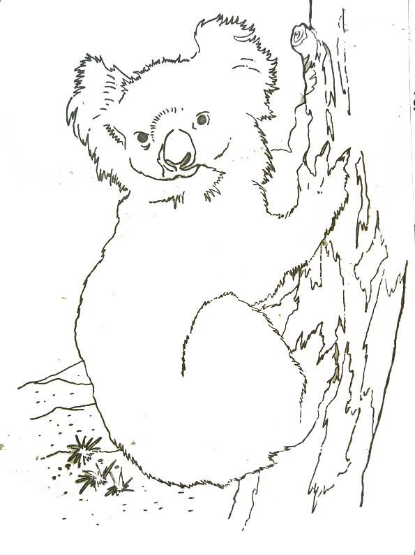 dessin de koala mignon