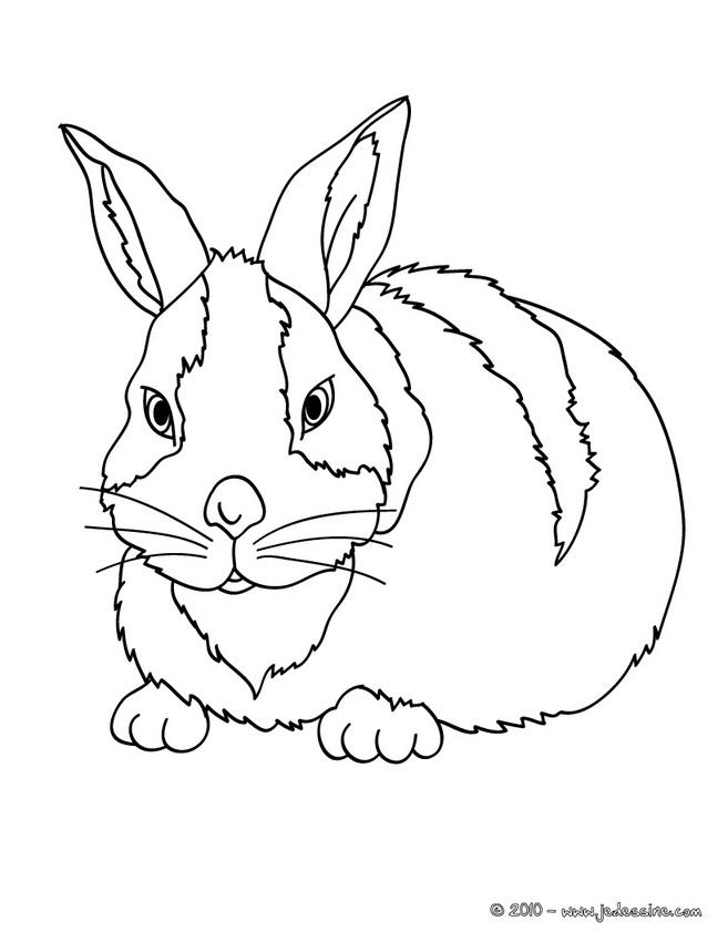 19 dessins de coloriage lapin carotte imprimer - Dessin de lapin ...