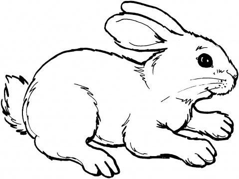 Coloriage simon lapin - Dessins lapins ...