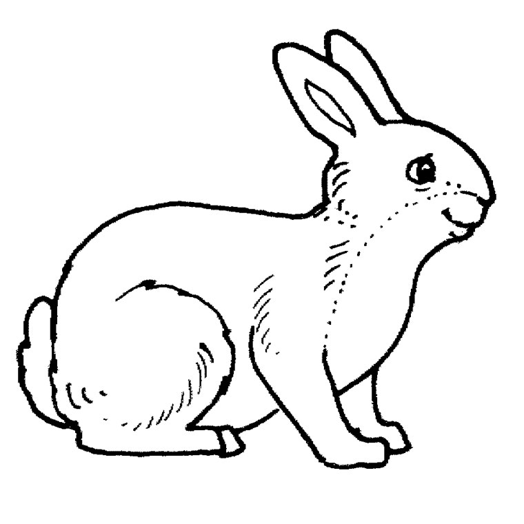 coloriage lapin fille