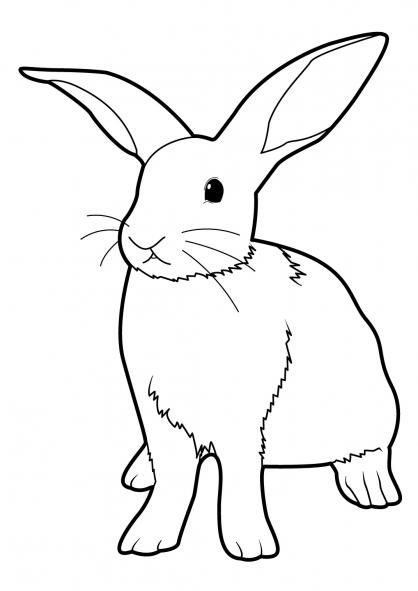 coloriage de lapin sur ordinateur