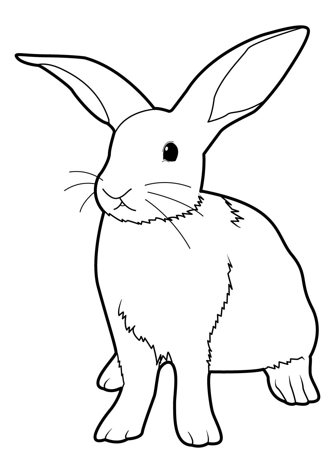 coloriage a imprimer lapin et chat