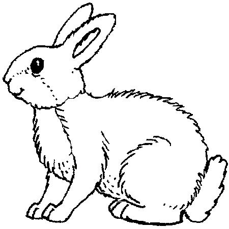 19 dessins de coloriage lapinoo imprimer - Comment couper les griffes d un lapin ...