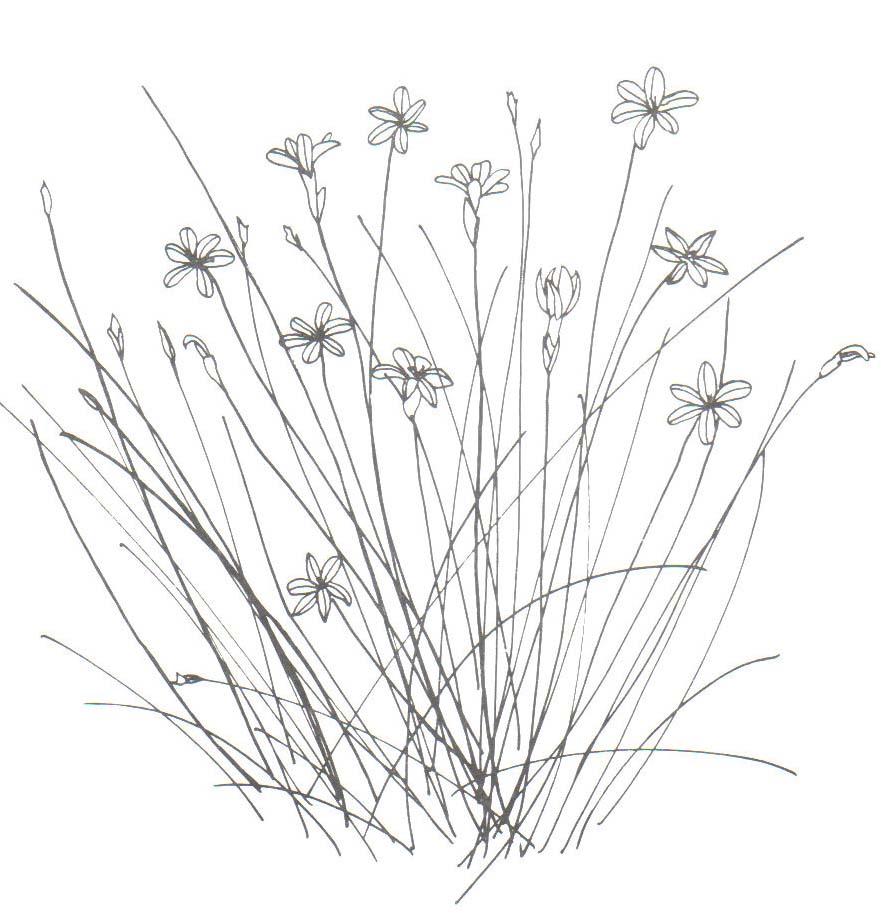 18 dessins de coloriage lavande imprimer imprimer - Fleur dessin images ...