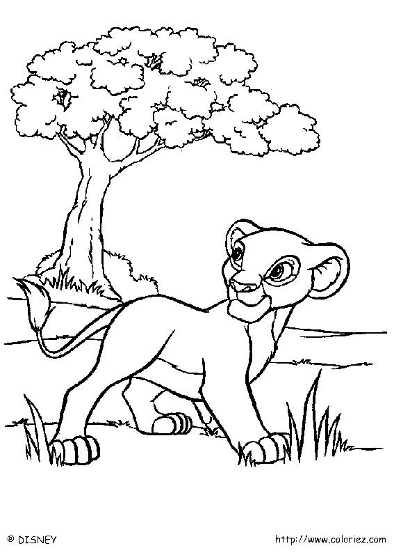 dessin sur le roi lion