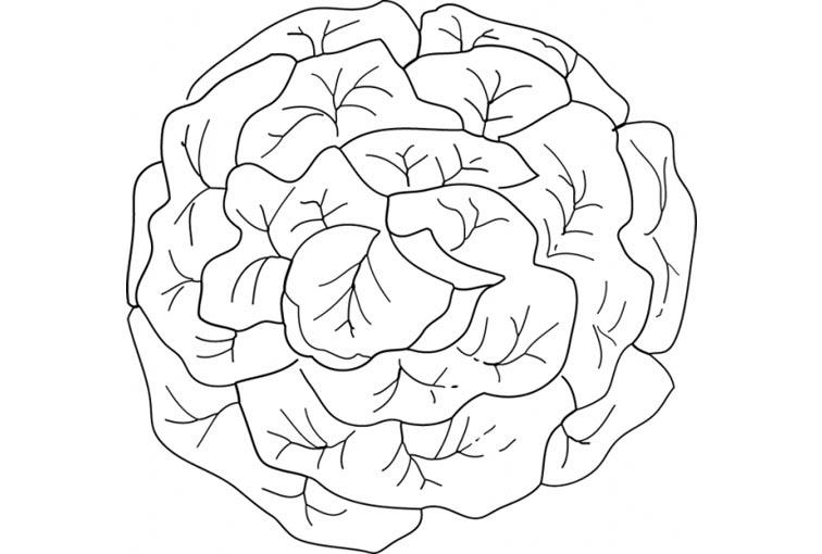99 dessins de coloriage légume gratuit à imprimer