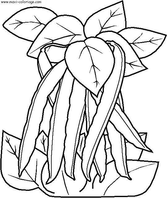 coloriage à dessiner fruits et légumes maternelle