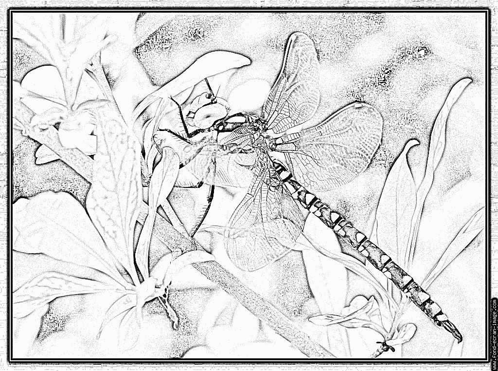 Image libellule coloriage dessiner - Libellule dessin ...
