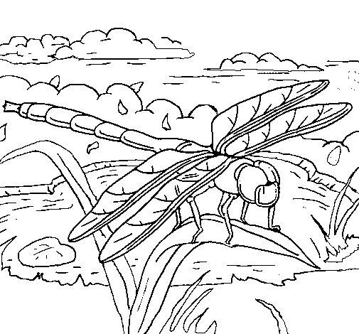 image libellule dessin à colorier