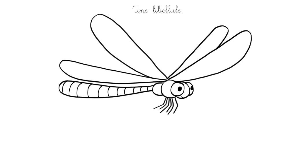 Dessin facile libellule - Photo de libellule a imprimer ...